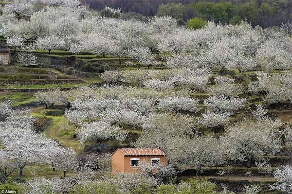 Những điểm đến đẹp nhất thế giới vào mùa xuân - anh 5