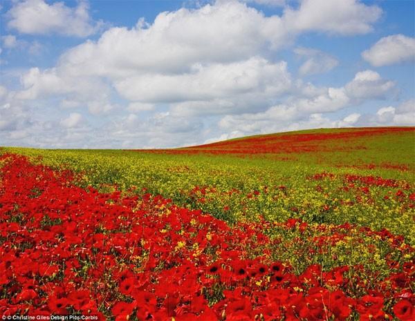 Những điểm đến đẹp nhất thế giới vào mùa xuân - anh 9