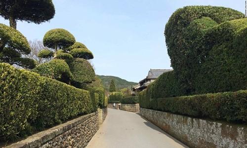Ghé thăm những ngôi làng bí ẩn Samurai ở Nhật Bản - anh 3