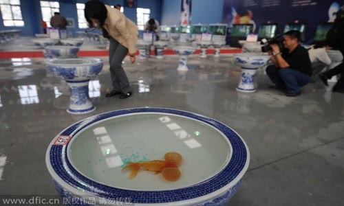 Những bảo tàng kỳ quặc nhất Bắc Kinh - anh 8