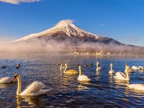 Chiêm ngưỡng những bức ảnh chỉ nhìn thôi đã muốn tới ngay Nhật Bản - anh 11