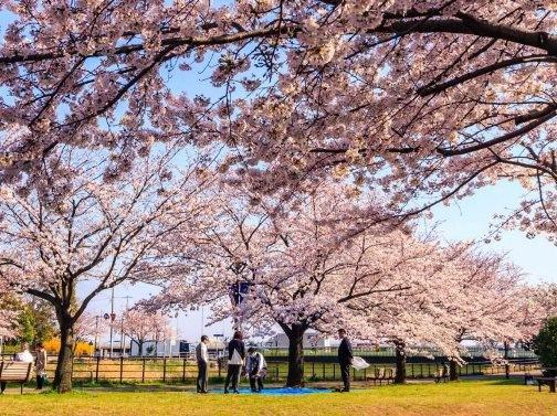Chiêm ngưỡng những bức ảnh chỉ nhìn thôi đã muốn tới ngay Nhật Bản - anh 3
