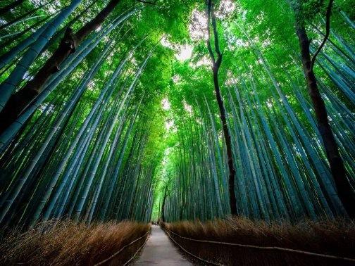 Chiêm ngưỡng những bức ảnh chỉ nhìn thôi đã muốn tới ngay Nhật Bản - anh 4