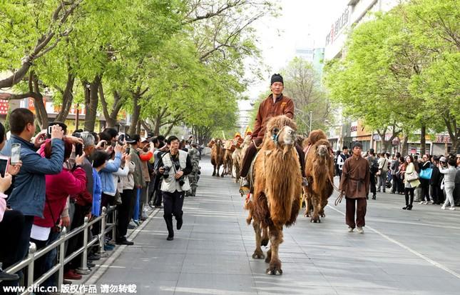 Diễu hành bằng lạc đà quảng bá sản phẩm trà - anh 2