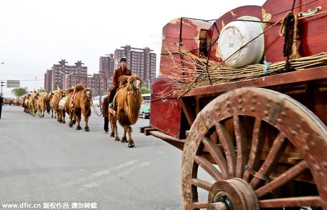 Diễu hành bằng lạc đà quảng bá sản phẩm trà - anh 5