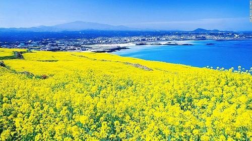 15 cảnh đẹp mê hồn ở Hàn Quốc - anh 10