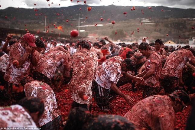 Những hình ảnh đẹp của lễ hội cà chua ở Colombia - anh 5