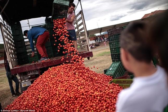 Những hình ảnh đẹp của lễ hội cà chua ở Colombia - anh 7