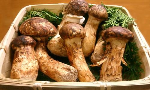 Điểm danh những loại thực phẩm hiếm và đắt nhất thế giới - anh 10