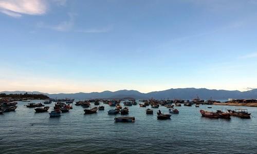 Ghé thăm cảng cá lớn nhất miền Nam Trung Bộ - anh 1