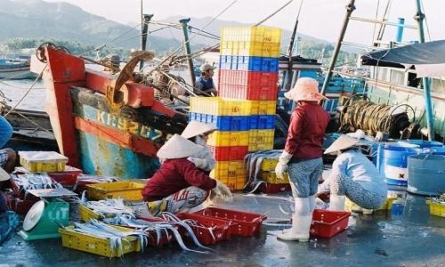 Ghé thăm cảng cá lớn nhất miền Nam Trung Bộ - anh 6