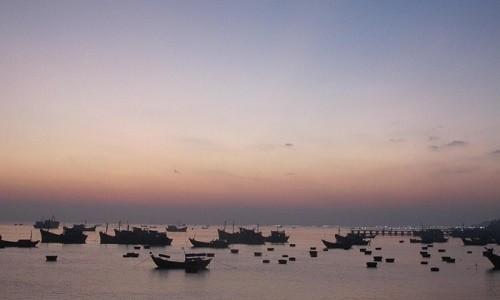 Ghé thăm cảng cá lớn nhất miền Nam Trung Bộ - anh 7