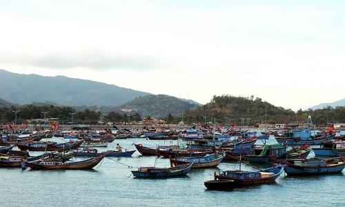 Ghé thăm cảng cá lớn nhất miền Nam Trung Bộ - anh 9