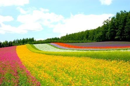 Đắm chìm trong sắc tím của những cánh đồng hoa oải hương trên khắp TG - anh 13