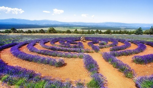 Đắm chìm trong sắc tím của những cánh đồng hoa oải hương trên khắp TG - anh 6