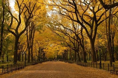 Cảnh sắc mùa thu đẹp ngỡ ngàng trên khắp thế giới - anh 11