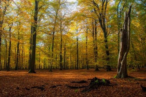 Cảnh sắc mùa thu đẹp ngỡ ngàng trên khắp thế giới - anh 17