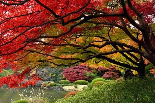 Cảnh sắc mùa thu đẹp ngỡ ngàng trên khắp thế giới - anh 18
