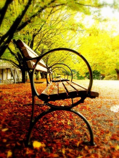 Cảnh sắc mùa thu đẹp ngỡ ngàng trên khắp thế giới - anh 19