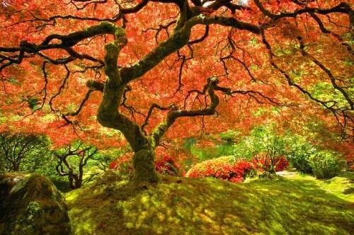 Cảnh sắc mùa thu đẹp ngỡ ngàng trên khắp thế giới - anh 2