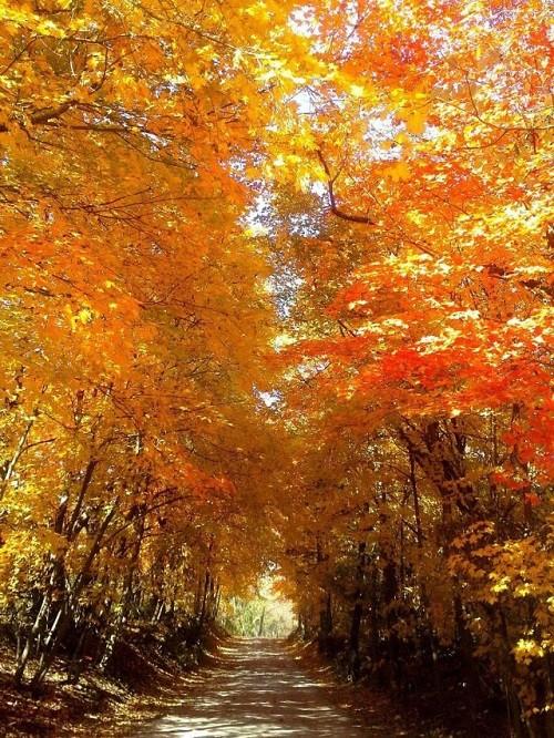 Cảnh sắc mùa thu đẹp ngỡ ngàng trên khắp thế giới - anh 20