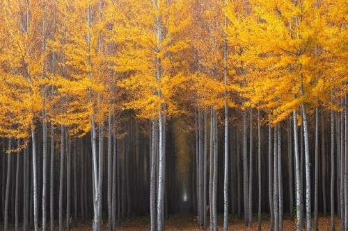 Cảnh sắc mùa thu đẹp ngỡ ngàng trên khắp thế giới - anh 3