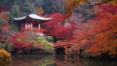 Cảnh sắc mùa thu đẹp ngỡ ngàng trên khắp thế giới - anh 7