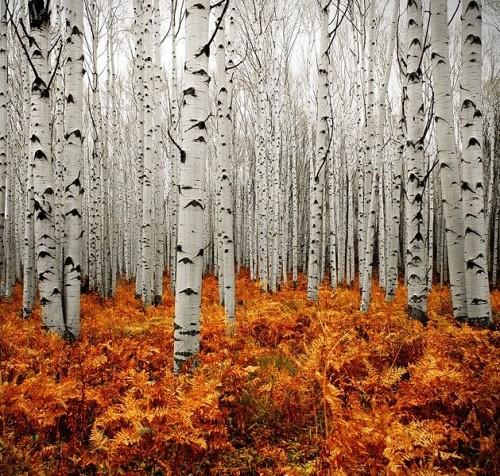 Cảnh sắc mùa thu đẹp ngỡ ngàng trên khắp thế giới - anh 9