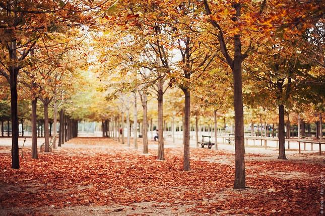 Ngắm cảnh mùa thu đẹp đến xao lòng ở Paris - anh 3