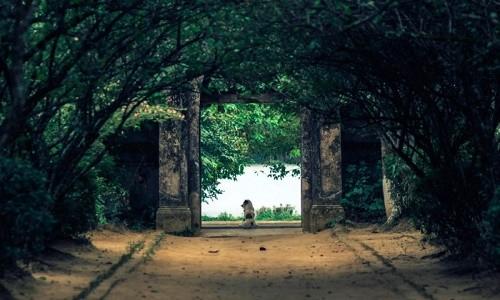 Cuối tuần, ghé thăm nhà vườn hơn 100 tuổi ở Huế - anh 1