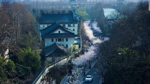 Ghé thăm Nam Kinh - Thành phố của các vị hoàng đế - anh 1