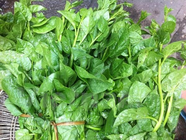 Những loại rau giúp giải nhiệt mùa hè - anh 1