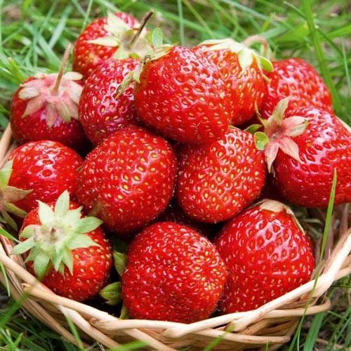 Mùa hè nóng nực nên ăn loại quả gì? - anh 7