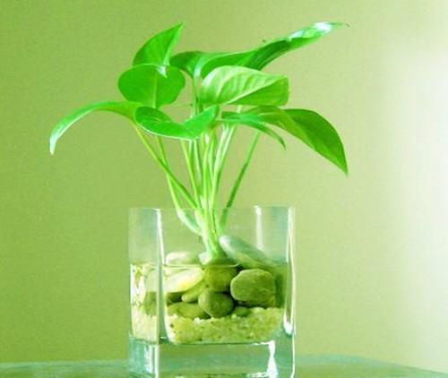 Bí quyết trồng hoa làm tăng tài vận cho bản thân - anh 1