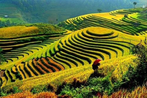 Điểm danh những lần lọt Top thế giới của Việt Nam năm 2015 (P1) - anh 7