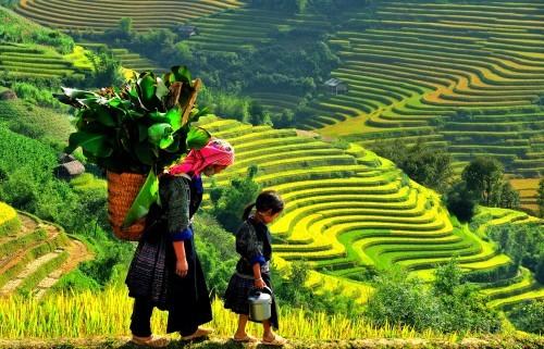 Điểm danh những lần lọt Top thế giới của Việt Nam năm 2015 (P1) - anh 2
