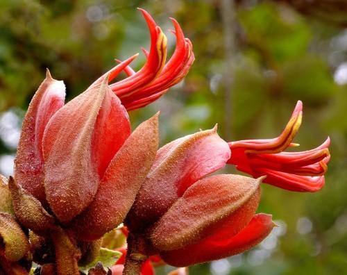 Ngỡ ngàng trước những loài hoa kỳ dị nhất thế giới - anh 6