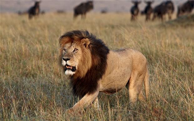 Top 12 loài động vật có cú đớp uy lực nhất thế giới tự nhiên - anh 10