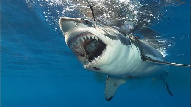 Top 12 loài động vật có cú đớp uy lực nhất thế giới tự nhiên - anh 11