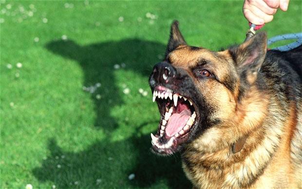 Top 12 loài động vật có cú đớp uy lực nhất thế giới tự nhiên - anh 12