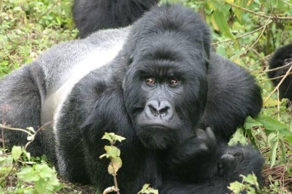 Top 12 loài động vật có cú đớp uy lực nhất thế giới tự nhiên - anh 5