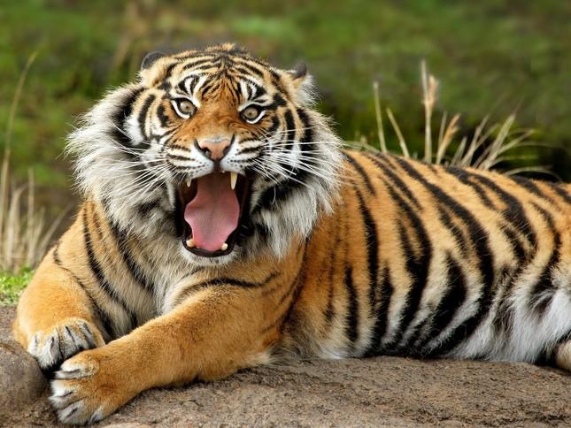 Top 12 loài động vật có cú đớp uy lực nhất thế giới tự nhiên - anh 7