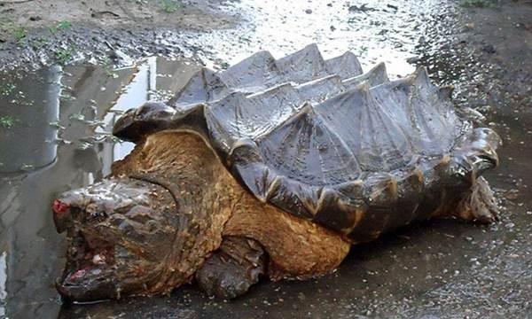 Top 12 loài động vật có cú đớp uy lực nhất thế giới tự nhiên - anh 8