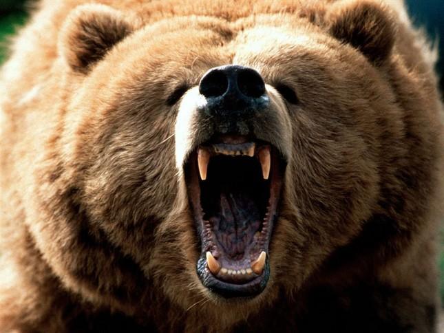 Top 12 loài động vật có cú đớp uy lực nhất thế giới tự nhiên - anh 9