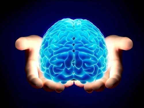 10 khám phá thú vị về não bộ có thể bạn chưa từng biết - anh 2