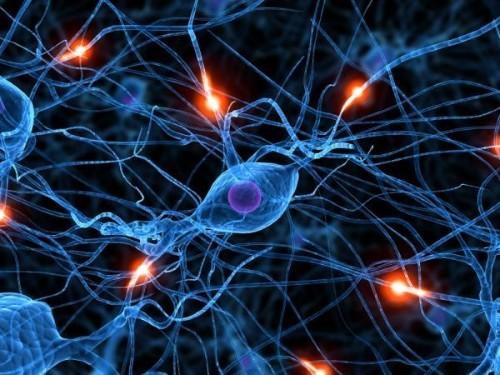 10 khám phá thú vị về não bộ có thể bạn chưa từng biết - anh 1