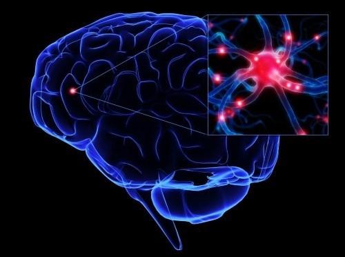 10 khám phá thú vị về não bộ có thể bạn chưa từng biết - anh 3
