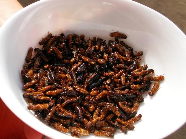 """Những loại côn trùng """"ngon-bổ"""" bạn nên thử 1 lần trong đời - anh 4"""