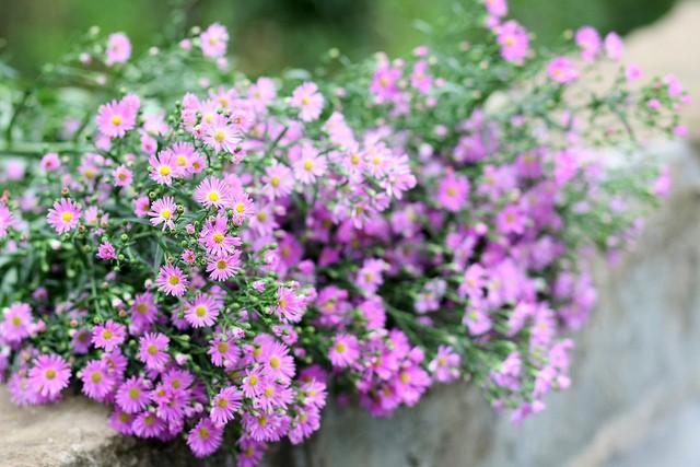 Đẹp rạng ngời Hà Nội 12 mùa hoa (phần 2) - anh 10