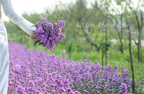 Đẹp rạng ngời Hà Nội 12 mùa hoa (phần 2) - anh 11